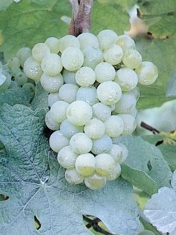 manzoni-bianco (1)
